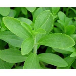 Stevia-Sugar-Steviosides-Stevia-Rebaudioside-A-Low-Calorie-Sweetener